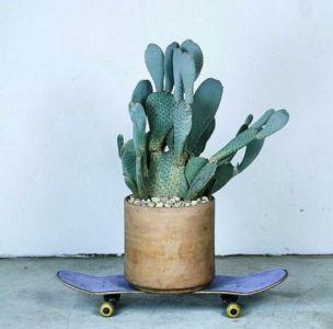 Cactus & skate - turbulences-deco.fr