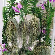 Plant The Future - Pinterest officiel @plantthefuture