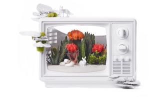 Plant The Future - TV Terrarium - plantthefuture.com