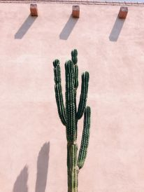Desert Life Botany - vsco.co