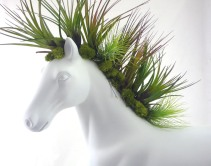 Plant The Future - Horse white Plants - plantthefuture.com