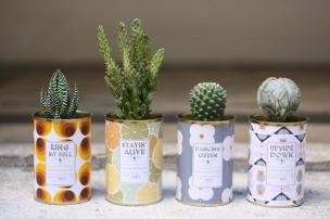 Aÿtypique cactus - milkdecoration.com