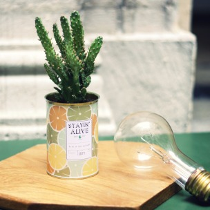 Aÿtypique cactus - Stayin alive - milkdecoration.com