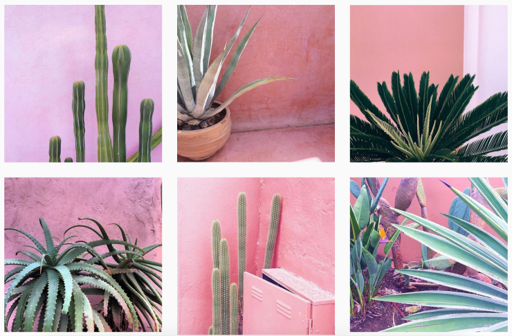 Plants on Pink Instagram @plantsonpink