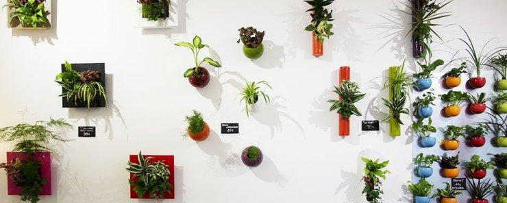 Boby La Plante - Photo Cécile Jaillard - lebonbon.fr